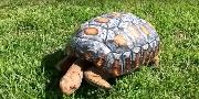 Una tortuga con caparazón en 3D