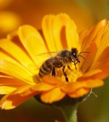 abeja-reuters.jpg