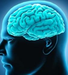 cerebro-efe2.jpg