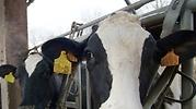 vacas1.jpg