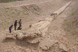 paleontologos.jpg