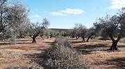 Biomasa-agricola.jpg