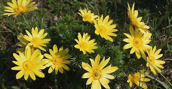 El origen de las plantas con flores ocurri hace 240 for Origen de las plantas ornamentales