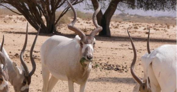 antilope-africano.jpg