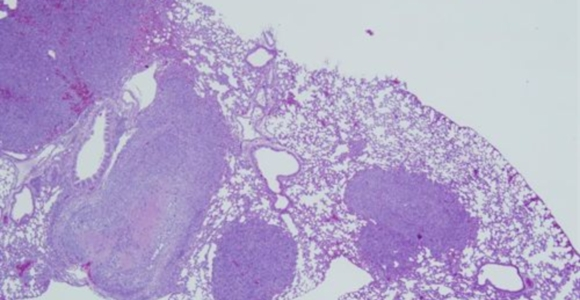 molecula-cancer-csic.jpg