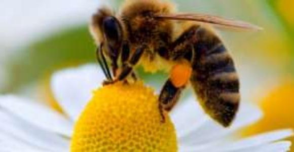 abeja-flor-efe.jpg