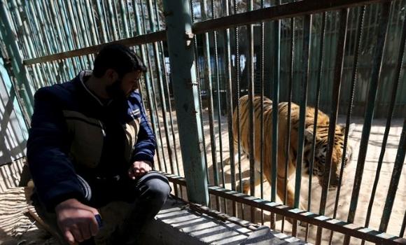 tigre-zoo-gaza-reuters-580x350.jpg