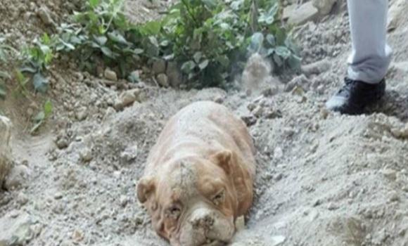 Facebook perra semen cerca de Madrid
