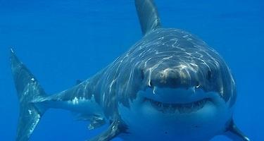 As� quieren acabar con los ataques de tiburones en toda Australia