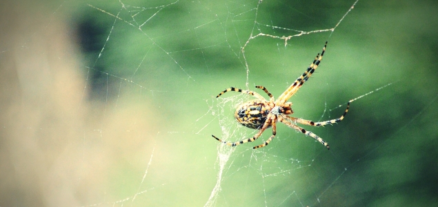 Por qué las arañas asustan más que el cambio climático
