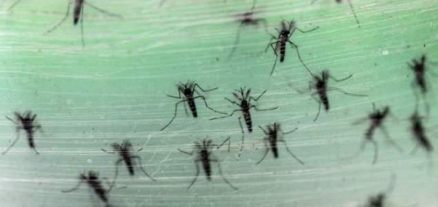 Zika-reuters_635.jpg