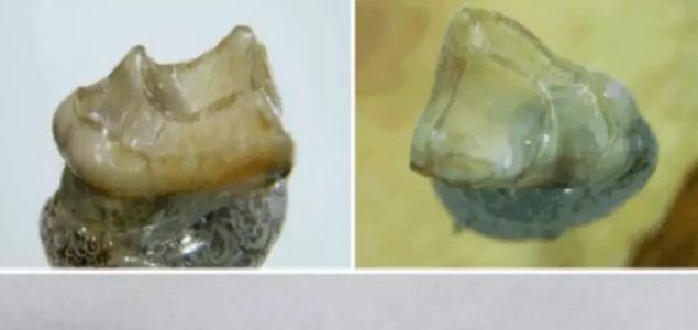 monos.635.fosiles.jpg