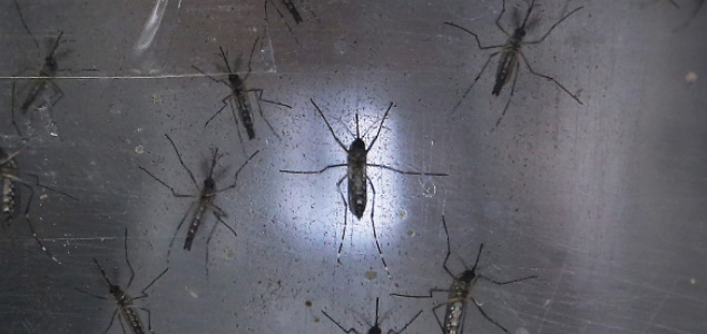 zika-mosquito-getty.jpg
