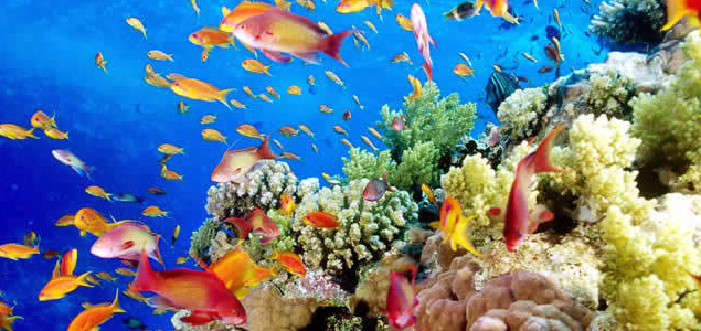 Resultado de imagen para ecosistemas marinos en colombia