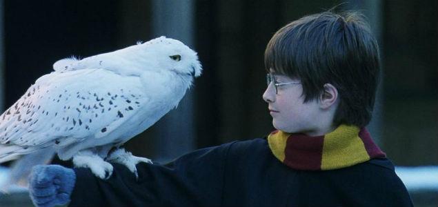 PETA acusa a Harry Potter de maltratar b?hos y lechuzas ...
