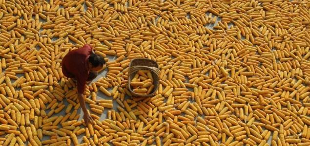 El absurdo problema de China: sufre un 'exceso' de cereales y algodón