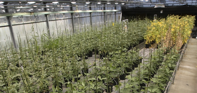Monsanto rechaza la oferta de 62,000 millones de Bayer