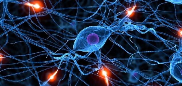 Conoce qu son y c mo funcionan las neuronas espejo for Espejo para ver al bebe en el auto
