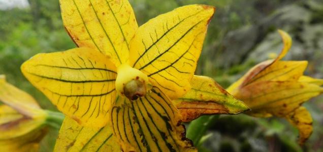 orquideadelimainterior.jpg