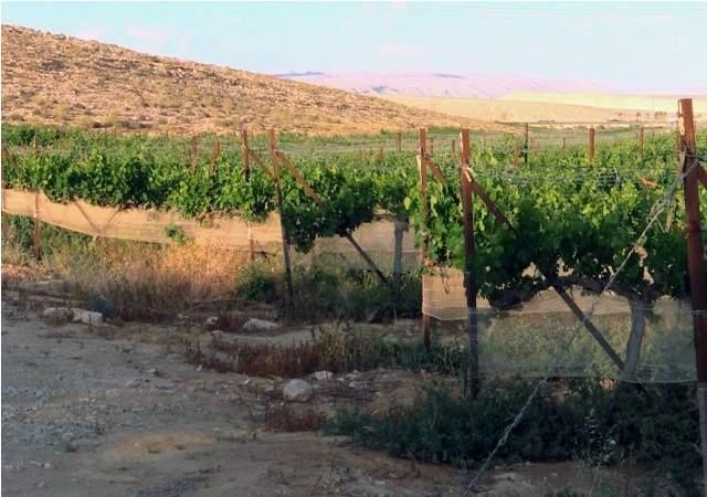 vino-desierto-israel.jpg