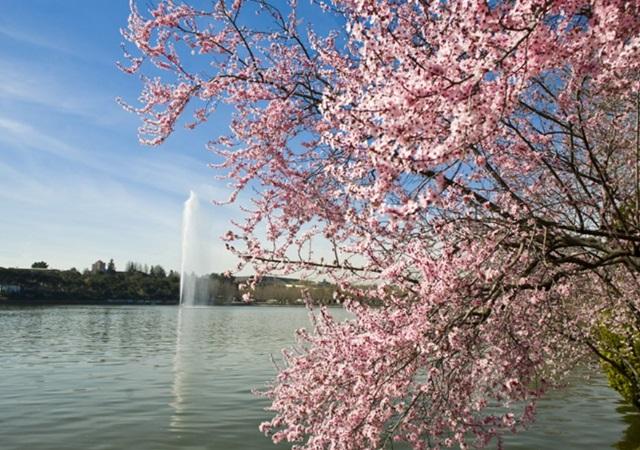 Disfruta De La Primavera En Los Mejores Parques De Madrid