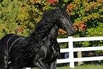 Un caballo más bello que usted