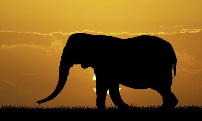 The elephant in the room: El problema de aplicar recortes en vez de reformas a largo plazo