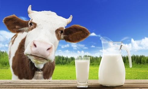 Resultado de imagen de niño tomando leche de la vaca