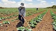 Planas pone en pie de guerra  al sector agrario andaluz