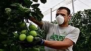 El virus también golpea a la alimentación: caerá este año hasta un 8% y destruirá 23.000 empleos