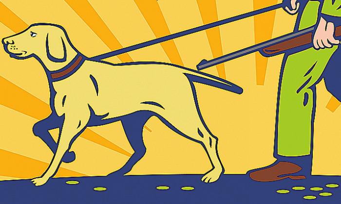 perro-cazador-700.jpg