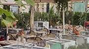 Las mejores terrazas de Madrid (alguna Michelin) para celebrar la Fase 2 (haga su reserva de mesa ya)