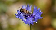 abeja-archivo.png