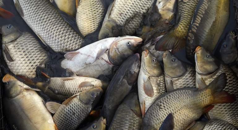 pescado-reuters.jpg