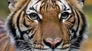 tigre-coronavirus-reuters.jpg