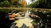 rio-hojas-getty.jpg