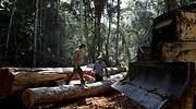 amazonas-tala-arboles-reuters.jpg