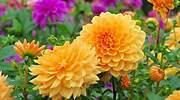 Cinco plantas con flores preciosas resistentes al sol y las altas temperaturas para decorar tu jardín
