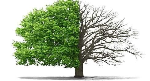Cuánto cuesta una transición ecológica justa? - elEconomista.es
