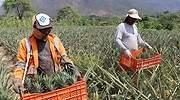 Ejecutivo envía a Congreso proyecto para modificar regimen agrario