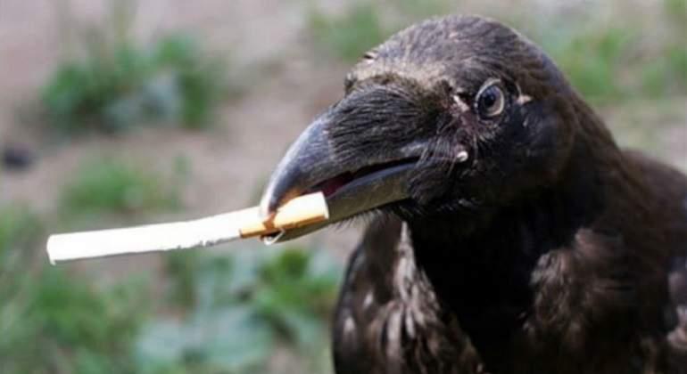 Cría cuervos y te recogerán las colillas, literalmente