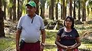 Alianzas productivas en María La Baja, apuesta a la esperanza del país palmero