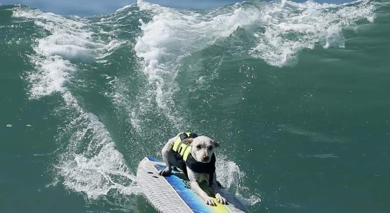 Abre la primera piscina para perros de la comunidad de for Piscina perros