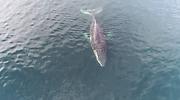 ballena-foto-centro-ideal.png