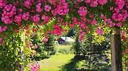 Por qué el vinagre es el mejor aliado para cuidar tu jardín y tener unas plantas sanas