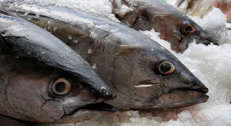 México no podrá sancionar a EU por restricciones al atún