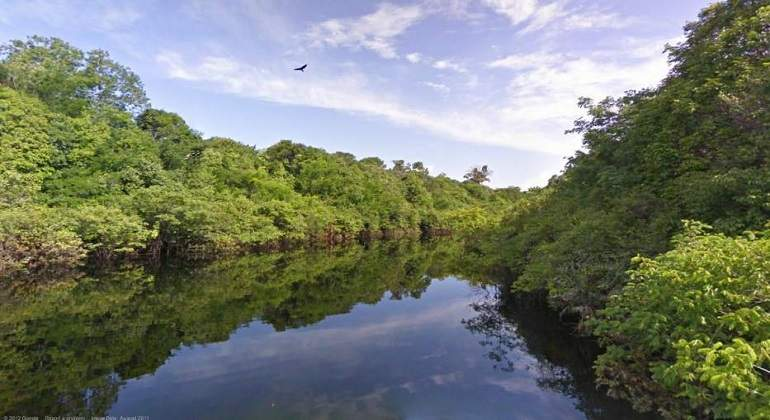 bosques770.jpg