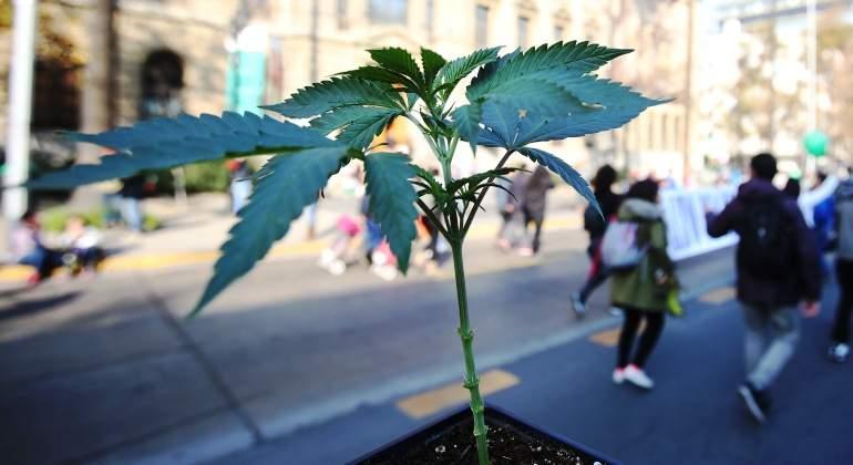 planta-marihuana-marcha-efe.jpg