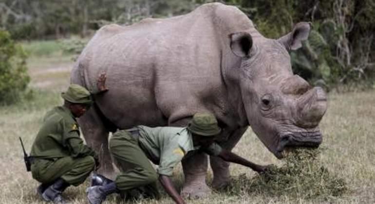 Muere Sudán, el último rinoceronte blanco