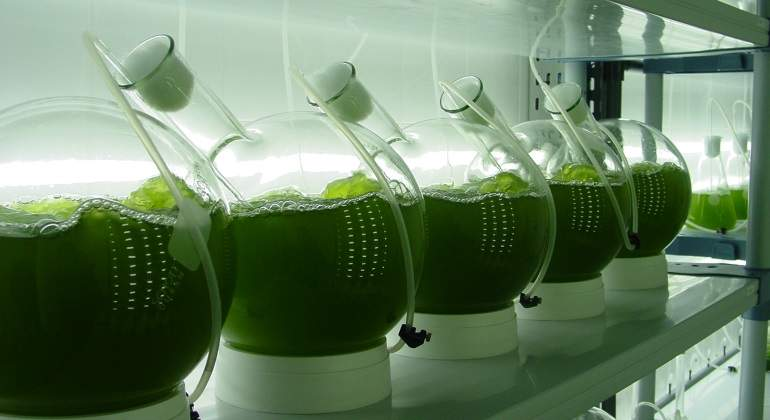 microalgas-getty-770.jpg